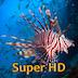Tropical Fish Retina Super HD 2048 for new iPad